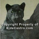 Black Cat - charcoal and pastel painting by Bj. deCastro